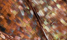 Extreme vergroting - de schalen van de Vlindervleugel, Vanessa Atalanta, 20x Stock Foto's