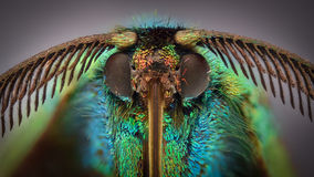 Extreme vergroting - Gekleurde dagmot Royalty-vrije Stock Foto's