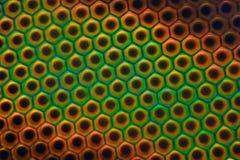 Extreme vergroting - het oog van de Daassamenstelling onder de microscoop Stock Foto