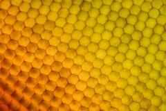 Extreme vergroting - het oog van de Vliegsamenstelling onder de microscoop Royalty-vrije Stock Afbeeldingen