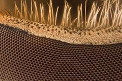 Extreme vergroting - Hoverfly-oog bij 20x Stock Afbeeldingen