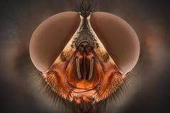 Extreme vergroting - Vlieg hoofd, vooraanzicht stock foto