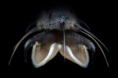 Extreme vergroting - Vliegpoot bij microscoop, 50x-vergroting stock fotografie