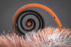 Extreme vergroting - Vlinderzuigorganen, Vanessa Atalanta royalty-vrije stock afbeelding