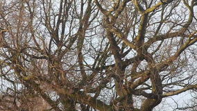Extreme weather - wind through tree branches stock video