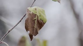 Extremely close-up view of iced leaf of tree in winter day stock video footage