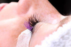Extremely long false eye lashes, process Royalty Free Stock Photography