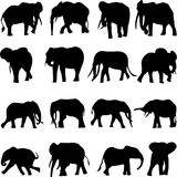 Extremely rare forest elephant Stock Images