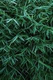 Extremes Makro der Bambusblattadern Lizenzfreie Stockbilder