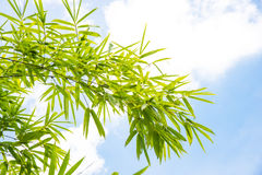 Extremes Makro der Bambusblattadern Lizenzfreie Stockfotografie