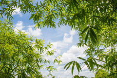 Extremes Makro der Bambusblattadern Lizenzfreie Stockfotos