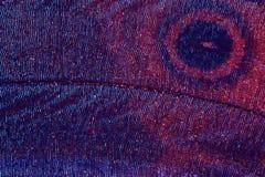 Extremes Makro des Basisrecheneinheitsflügels stockbilder