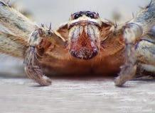 Extremes Makroschussauge von Zygoptera-Libelle in wildem Lizenzfreie Stockbilder
