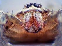 Extremes Makroschussauge von Zygoptera-Libelle in wildem Stockbilder
