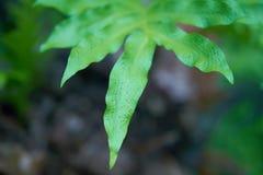 Extremidad de la hoja o del follaje grande en fondo natural de la falta de definición, cerrada para arriba foto de archivo libre de regalías