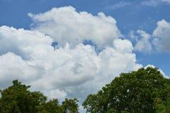 Extremidad del árbol en el cielo azul y las nubes fotografía de archivo
