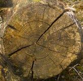 Extremidade da árvore Foto de Stock Royalty Free