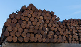 Extremidades de Ros de aço Foto de Stock Royalty Free