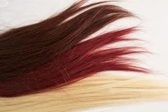 Extremidades do cabelo Fotografia de Stock Royalty Free