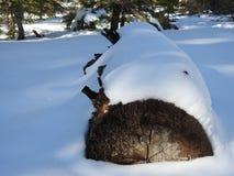 Extremo caido del árbol en nieve Foto de archivo libre de regalías
