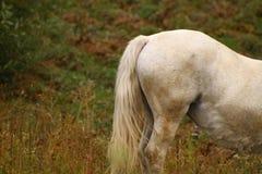 Extremo del caballo Imágenes de archivo libres de regalías