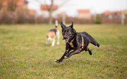 Extremt lycklig hund Arkivfoton