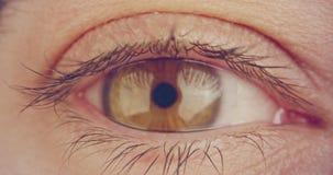 Extremt makroskott av ett brunt mänskligt öga lager videofilmer