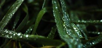 Extremt slut upp av gräs med vattendroppar i morgondagg royaltyfria foton