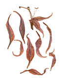 Extruded dried lily petals Royalty Free Stock Photo
