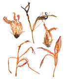 Extruded dried lily petals Stock Images
