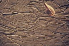 Exture da areia molhada do mar com testes padrões do fim da água acima Fotografia de Stock