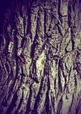 Exture, fondo Corteza del árbol Álamo viejo, al aire libre, sobre la madera Foto de archivo