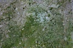 Exture porowaty kamienny stosowny dla tło wizerunku fotografia stock