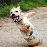 Exuberância Imagens de Stock