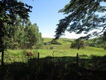 Exuberancia brasileña de la granja Imagen de archivo libre de regalías