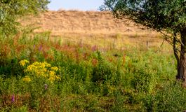 Exuberant flowering wild plants in a nature reserve at the foot Royalty Free Stock Photos