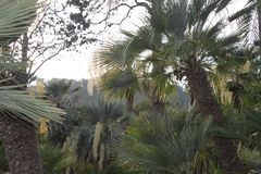 Exhuberant forest of palms royalty free stock photography