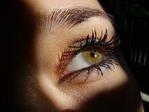 eye зеленый цвет Стоковые Изображения RF