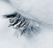 Eye. Detail of eyelashes Stock Photos