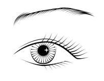 The eye. Vecot eye, black and white Stock Photo