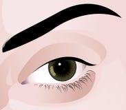 Eye. Realistic  illustration of human eye Royalty Free Stock Photo