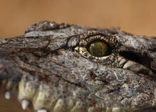 Eye. A photo of the eye of a croc royalty free stock photography
