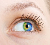 Eye. Colourful human eye of the girl Stock Images