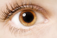 Eye. A young woman's eye - close up royalty free stock image
