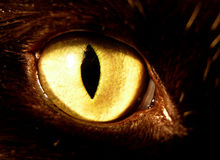 Eye. Yellow feline eye on black background Royalty Free Stock Photo