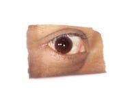 Eye. Single Eye over white background Royalty Free Stock Images