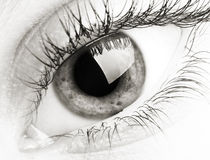 Eye. Close up of a woman eye Royalty Free Stock Images