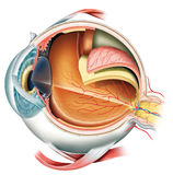 Eye stock illustration