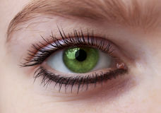 The Eye. Green Eye of a woman Royalty Free Stock Image