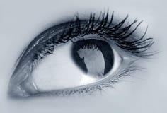 Eye. Beauty blue eye see at you stock photo